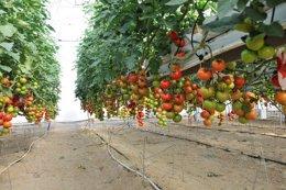 Foto: Empresas agroalimentarias extremeñas se reúnen en FIAL con compradores de 23 países (CARM)