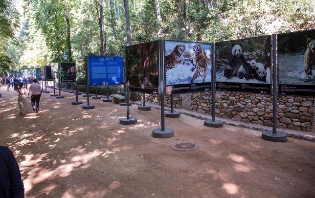 Exposición animales salvajes en el bosque de la Alhambra