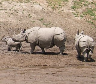 La población de vertebrados terrestres se ha reducido a la mitad desde 1970