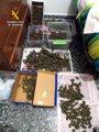 Foto: Desmantela tres puntos de cultivo y distribución de marihuana en Santa Amalia y Conquista del Guadiana
