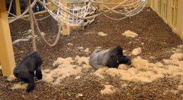 Foto: El Tribunal de Cuentas abre el plazo por posible responsabilidad contable en la Casa de los Gorilas de Cabárceno (EUROPA PRESS)