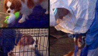 El gos de la infermera amb Ebola de Dallas comença un període de proves