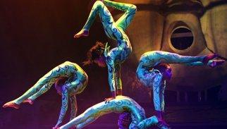 """Experts constaten que és """"millor"""" prohibir l'ús d'animals en circs que regular-ho"""