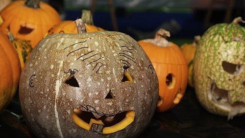 EE.UU. gastará 350 millones en disfraces de Halloween para mascotas
