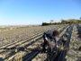 Foto: Asocialoe renovará su directiva con la perspectiva de cuadruplicar las hectáreas de cultivo en España en cinco años