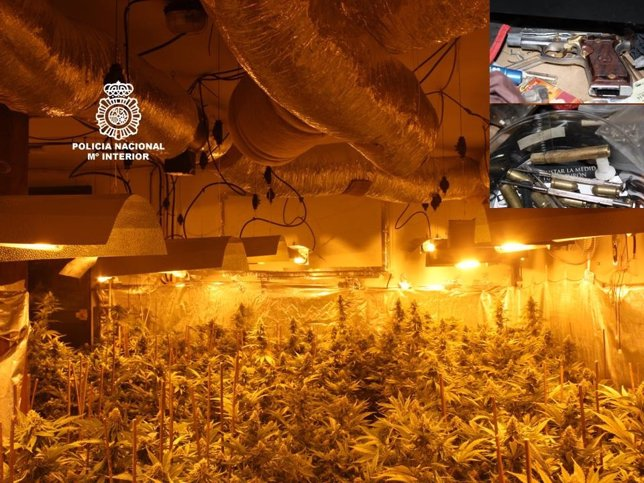 Diez detenidos con cuatro plantaciones 39 indoor 39 de marihuana - Plantaciones de marihuana interior ...