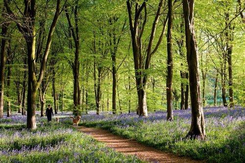 Savernake Forest en Gran Bretaña