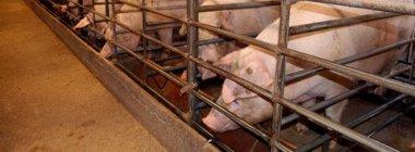 Foto: El Justicia pide al Gobierno que facilite información a la Asociación para la Protección y el Bienestar de los Animales (EUROPA PRESS)