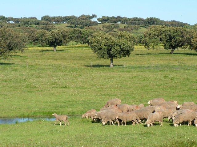 Foto: COMUNICADO: Corderex participa en una jornada sobre el entrenamiento de ovinos para pastoreo selectivo