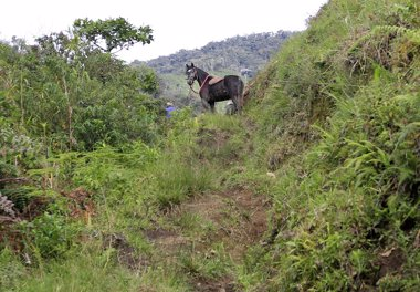 Foto: La restitución de tierras en Colombia, un problema que está lejos de resolverse (JAIME SALDARRIAGA / REUTERS)