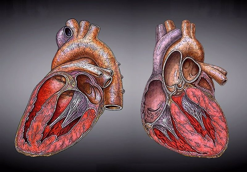 Resultado de imagen de Factores que aumentan el riesgo de ataque cardíaco