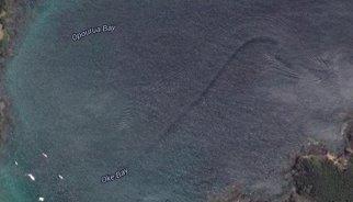 Localizan en Google Maps un misterioso monstruo marino en Nueva Zelanda