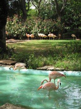 Foto: El Zoo abre un camino para los alumnos de la Ciutadella (EUROPA PRESS)