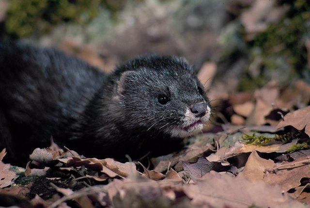 Foto: Aprobados los planes de gestión de las 14 especies de flora y fauna amenazadas