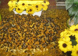 Foto: UPyD emplaza al Gobierno a garantizar controles sanitarios ante la miel procedente de China (EUROPA PRESS/REMITIDA)