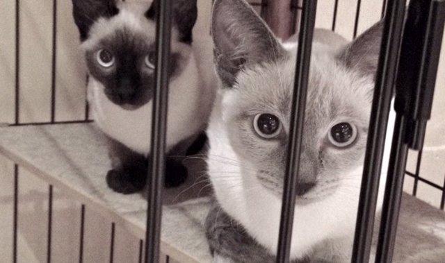 parque temático para gatos