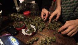Foto: El Gobierno uruguayo concederá la próxima semana licencias para producir marihuana (REUTERS)