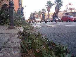 Foto: Els vents passen els 109 km/h a Vilafranca i provoquen més de 100 servicis de Bombers (PLV)