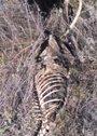 PACMA denuncia el hallazgo de varios cadáveres de perros