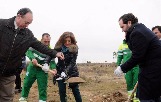 Foto: Botella participa en las plantaciones que permitirán a los madrileños colaborar en crear una zona verde en Valdebebas