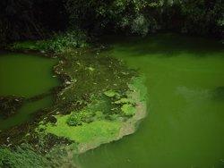 Foto: L'activitat humana pot propiciar l'augment d'algues nocives per a la salut en els llacs (FERNANDO COBO)
