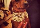 Foto: Perros ricos en Instagram: los Paris Hilton caninos