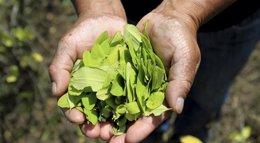 Foto: Incautadas 27 toneladas de coca molida boliviana camuflada como yerba mate (JAIME SALDARRIAGA / REUTERS)