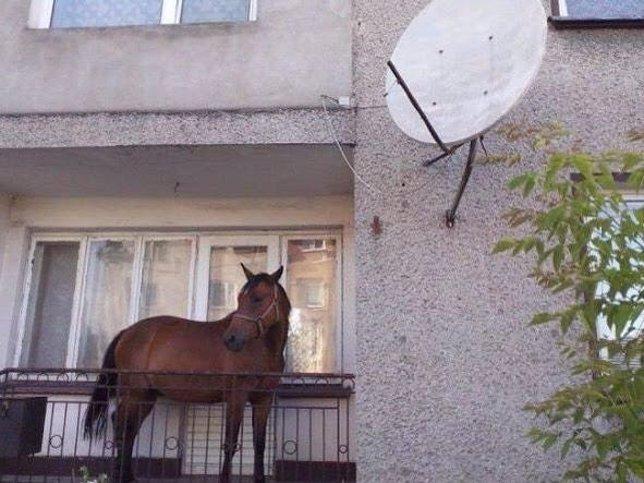 Horse Luis: El fen�meno viral de Twitter que no termina