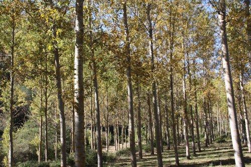 Imagen de un bosque aragonés.