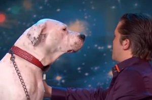 Foto: Un perro le hace la competencia a Whitney Houston con su 'I will always love you' (YOUTUBE)