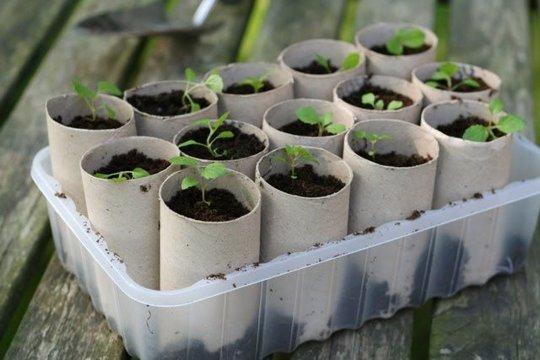 semilleros.jpg