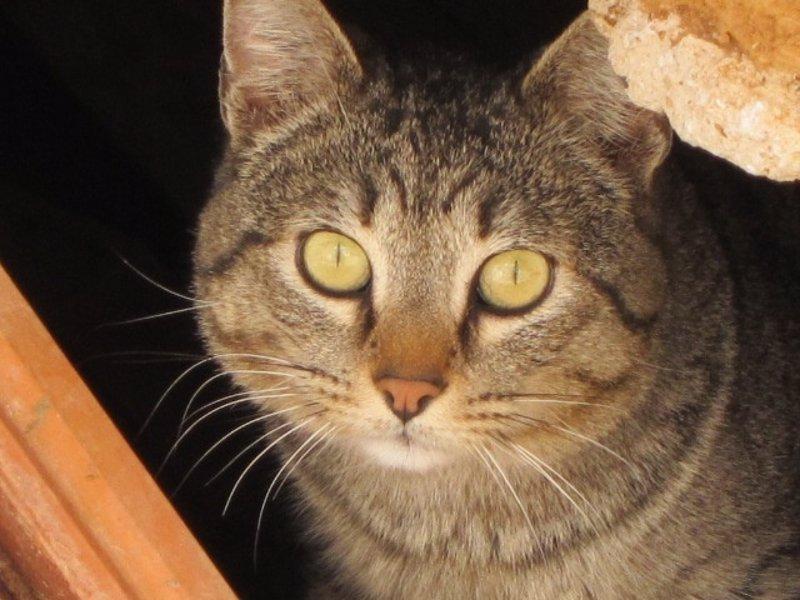 Varios municipios mallorquines inician una campa�a sobre tenencia y cuidado de mascotas