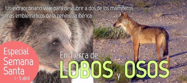 Foto: Una empresa vallisoletana ofrece una experiencia de ecoturismo para descubrir el lobo ibérico y el oso pardo