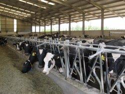 Foto: Agro.- El Govern aborda amb el sector la supressió de les quotes lleteres (ASAJA)