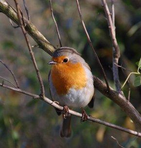 Foto: SEO/BirdLife imparte un curso de iniciación a las aves de la campiña en Noja (SEO/BIRDLIFE)