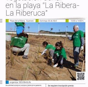 Foto: Suances.- Voluntarios mejorarán el domingo la vegetación dunar de las playas La Ribera y La Riberuca (AYTO)