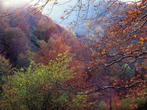 Foto: El nuevo PDR destinará el 10% de sus fondos a potenciar el sector forestal (GOBIERNO )