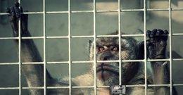 Foto: Igualdad Animal denuncia el maltrato a animales de laboratorio (IGUALDAD ANIMAL)