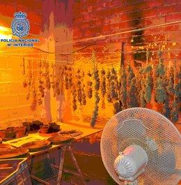 Foto: Dos arrestados por tener laboratorios de cultivo de marihuana en una obra (EUROPA PRESS/CNP)