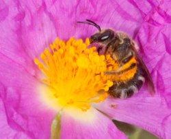 Foto: La primavera s'avança al calendari per l'augment de les temperatures màximes (JAVIER LOSARCOS)
