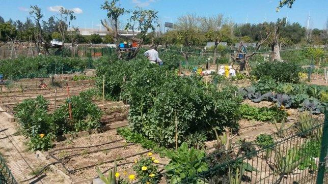 Sorteadas las 41 parcelas para implantar nuevos huertos for Parcelas para alquilar en sevilla