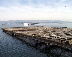 Foto: Pesca.- La toxina sigue remitiendo y reabren de una tacada seis polígonos de mejillón en las rías de Arousa y Vigo (EUROPA PRESS)