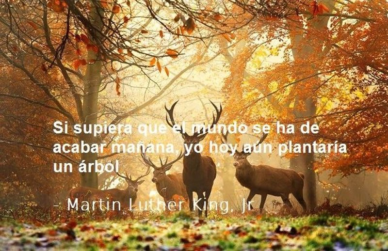 Mensajes Frases Poemas Del Dia Mundial Del Medio Ambiente   MEJOR