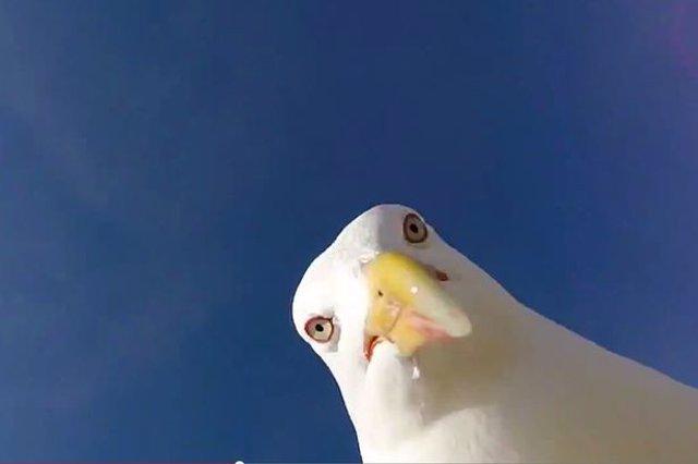 selfie gaviota