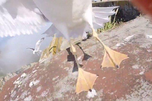 vuelo gaviota