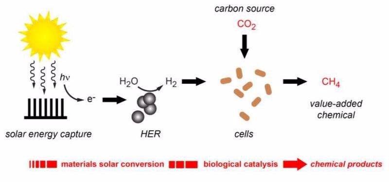 Otro paso adelante para lograr la fotosíntesis artificial