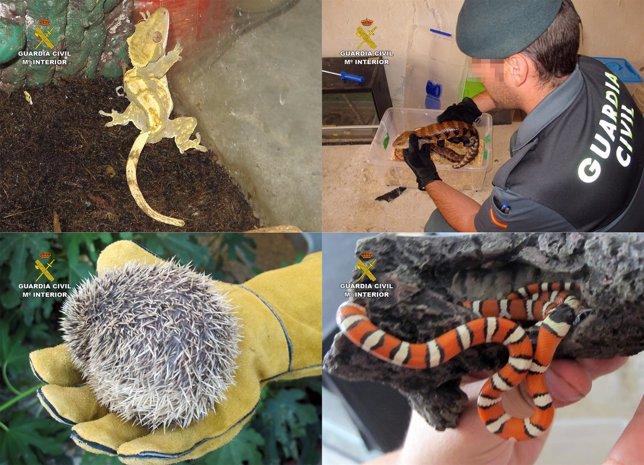 Algunos de los animales exóticos comercializados irregularmente