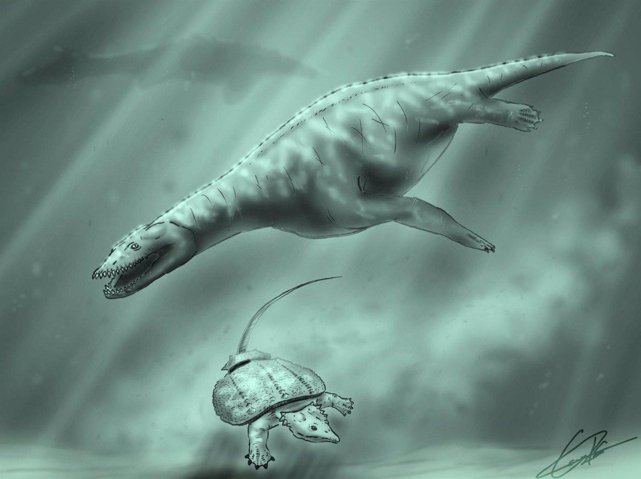 Identificados varios reptiles marinos en yacimientos de Manzanera (Teruel)