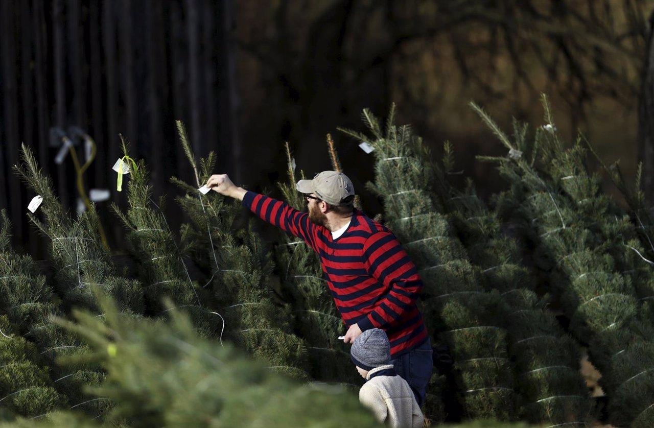 Lugares donde comprar un rbol de navidad respetuoso con el medio ambiente - Arboles artificiales madrid ...