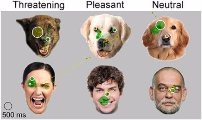 Expresiones faciales analizadas por un perro